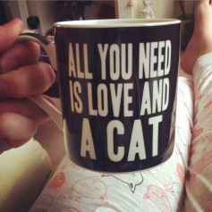all-you-need-is-love-and-a-cat